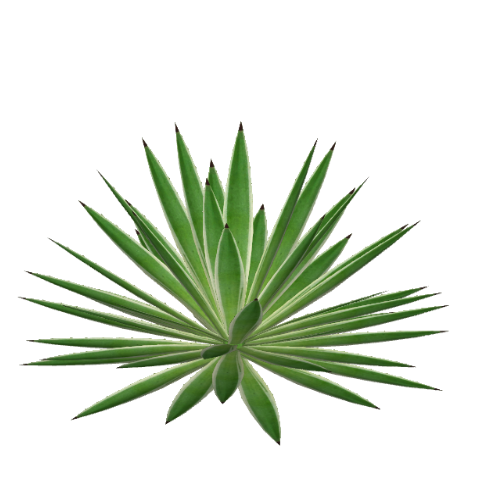 Drawn 20vase 20top 20view additionally File Variegated Caribbean Agave  Felipe further Palm besides Guard House Medium Config in addition Speaker System For Room Speaker System Large Room. on garden design with palm trees