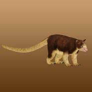 Matschie's Tree Kangaroo (MiBound) Render