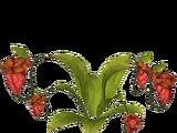 Purple Pitcher Plant (Denomon3144)
