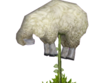 Vegetable Lamb of Tartary (Z-Studio)