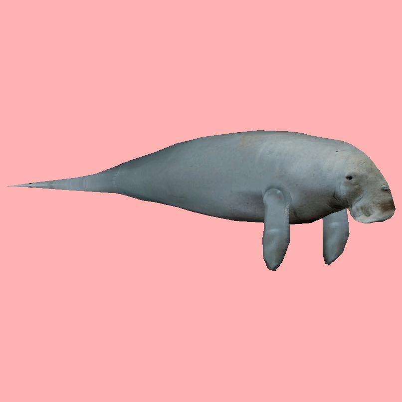 Dugong Ludozoo Zt2 Download Library Wiki Fandom