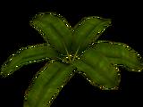 Banana Leaf (Fauna)