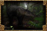 Mountain Tapir (Eryel)