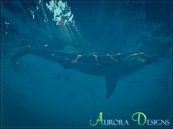 Great White Shark Aurora Designs Zt2 Download Library Wiki