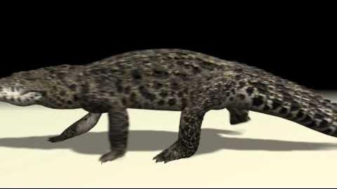 Cuban Crocodile Animations