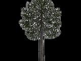 Monkey Puzzle Tree (Aurora Designs)