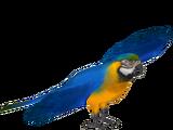 Blue and Gold Macaw (Sneke Bite)