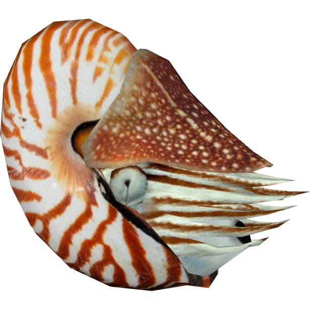 Nautilus Zerosvalmont Amp Zoker Zt2 Download Library