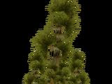 Florida Palm (Hispa Designs)
