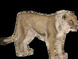 Steppe Lion (Lgcfm & Ulquiorra)