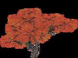 Japanese Maple (SilesianTomcat)