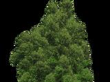 Big Tree (FelipeepileF)