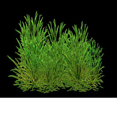 Category Salt Marsh Foliage Zt2 Download Library Wiki