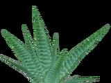 Aloe Vera (Aurora Designs)