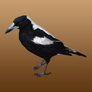 Australian Magpie (Jannick) Render