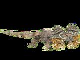Frill-necked Lizard (Hispa Designs)
