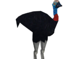 Southern Cassowary (Colonel Swampert)