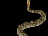 Mojave Rattlesnake (Hispa Designs)