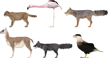 Chilean Critters (lgcfm)
