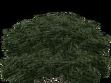 Cedar Bush (Nessich)