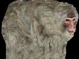 Japanese Macaque (Hispa Designs)