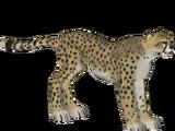 American Cheetah (Dinosaur)