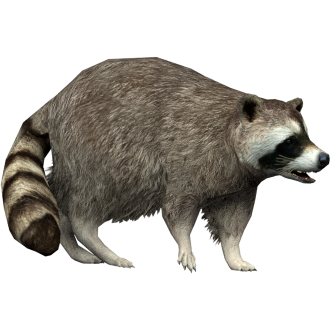 Raccoon Yukon Zt2 Download Library Wiki Fandom