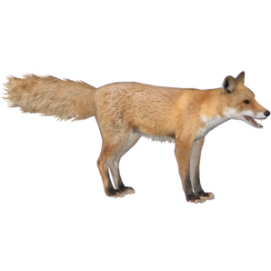 Red Fox Hendrix Zt2 Download Library Wiki Fandom