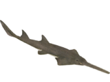 Sawfish (HENDRIX)