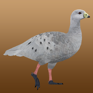 Cape Barren Goose (Nessich) Render