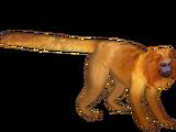 Golden Lion Tamarin (Ulquiorra)