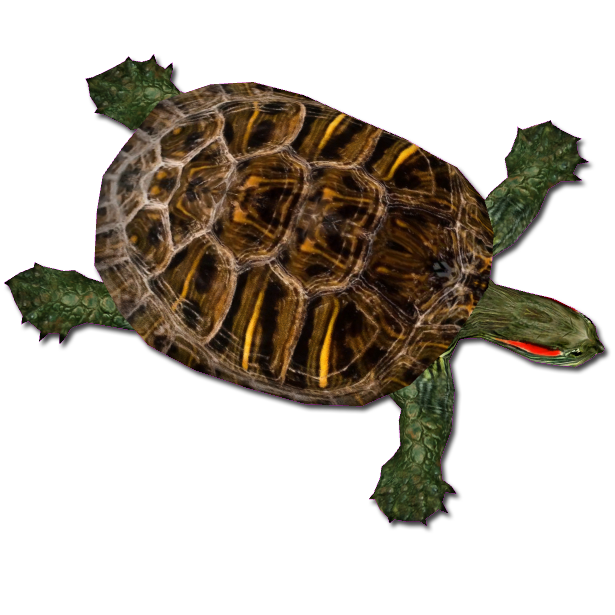 Red Eared Slider (MiBound) ZT2 Download Library Wiki