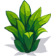 Chinese Fern-icon