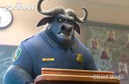 Zootopia - Chief Bogo