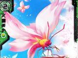 Cherry Blossom Butterfly, Full Blossom