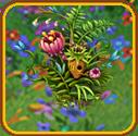 Pixie Flowers